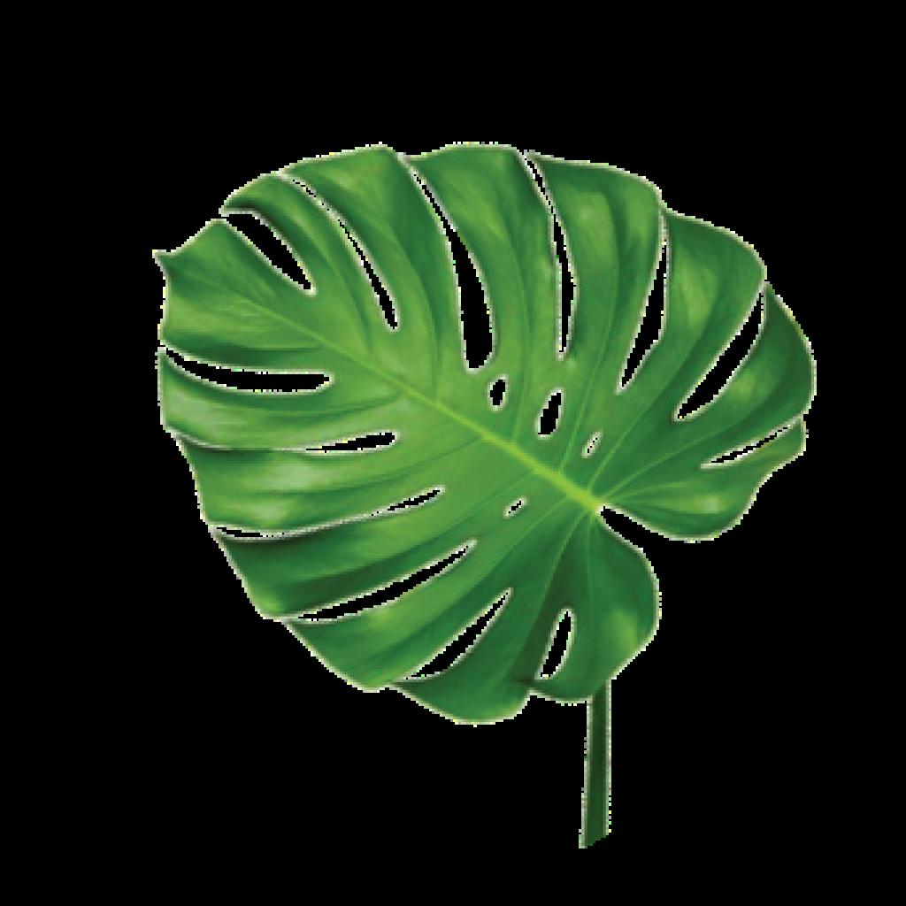 leafwpmonsterco